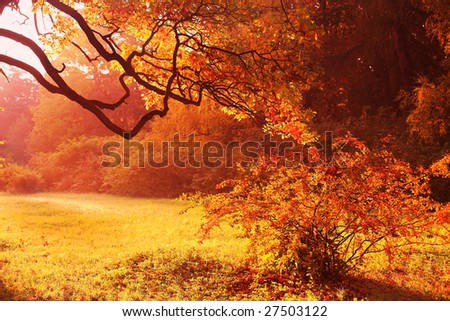 Yellow autumn background in japanese style - stock photo