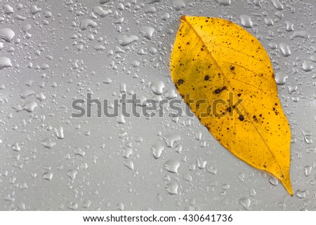Yellow autumn leaf on a gray metal surface with raindrops. Fall. - stock photo