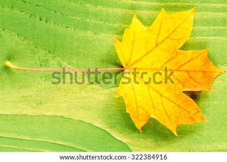 Yellow autumn leaf over green wooden background - stock photo