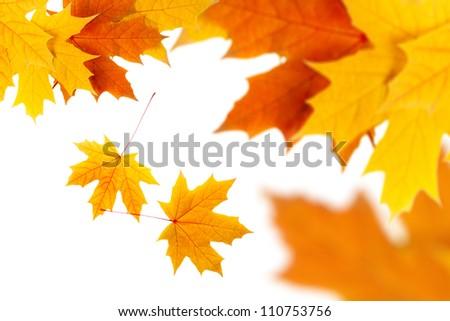 yellow autumn leaves isolated on white - stock photo