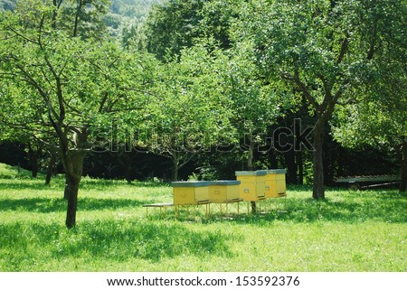 Yellow beehives for honey bees in a field surrounded by trees - stock photo
