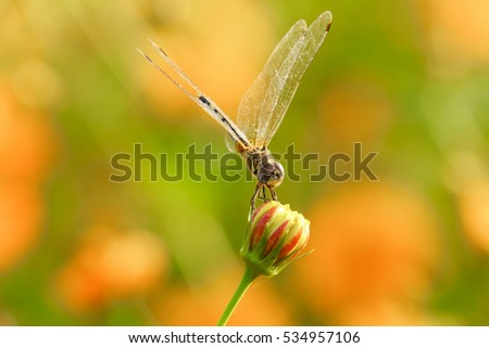 Yellow black pattern dragon fly on flower close up