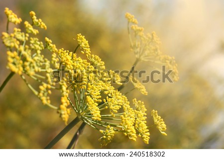Yellow blossom near country road - stock photo