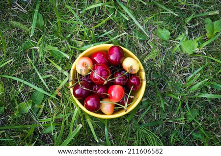 Yellow bowl with sweet cherries on a grass - stock photo