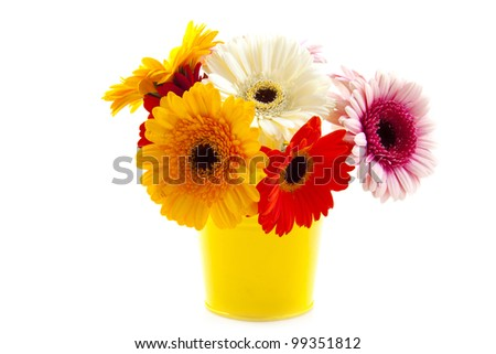 Yellow bucket with colored gerbera's isolated over white