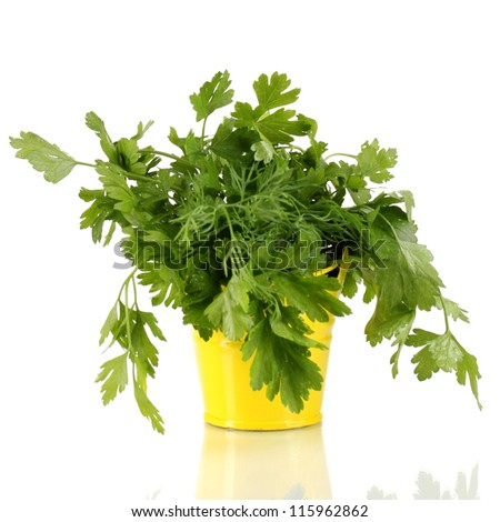 Yellow bucket with parsley and dill isolated on white - stock photo