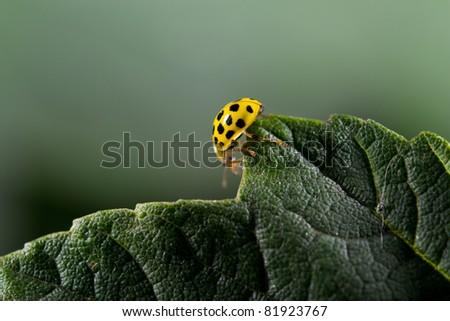yellow bug on tour - stock photo