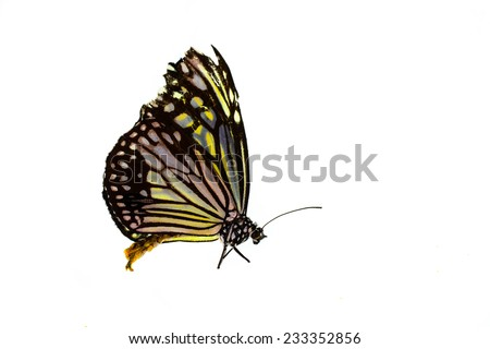 Yellow butterfly isolated on white. - stock photo