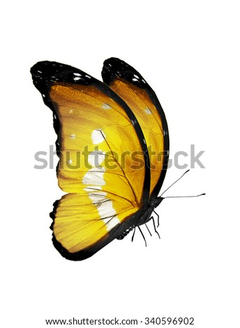 Yellow butterfly, isolated on white background - stock photo