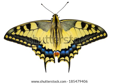 yellow butterfly on white white background, Isolated on white background, clipping path. - stock photo