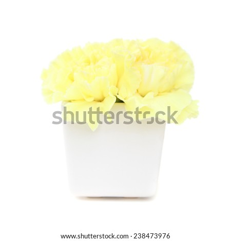 Yellow Carnation in the vase - stock photo