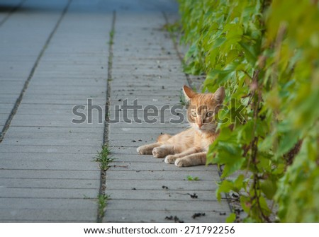 Yellow cat relaxing on the street in leaves - stock photo