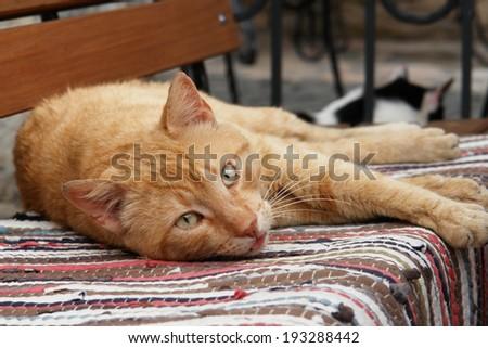 Yellow cat rest - stock photo