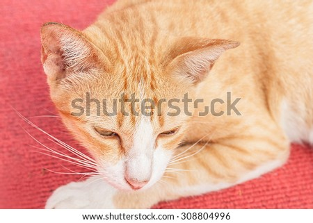 yellow cat sleeping on red carpet