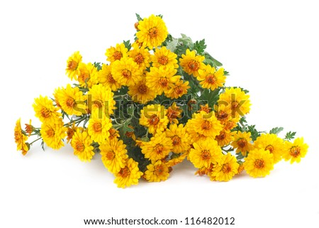 yellow chrysanthemum bouquet isolated on a white background - stock photo