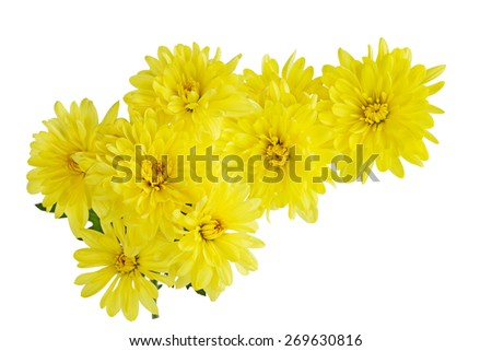 Yellow Chrysanthemum bundle flower isolated on white background - stock photo