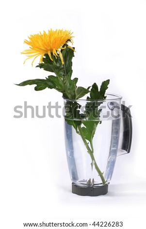 Yellow chrysanthemum in a jug with water - stock photo