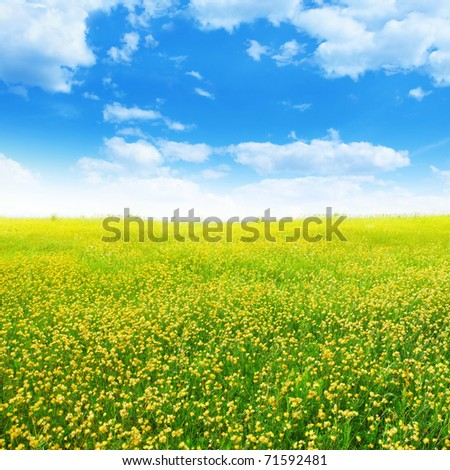 Yellow clover on summer meadow  and blue sky.