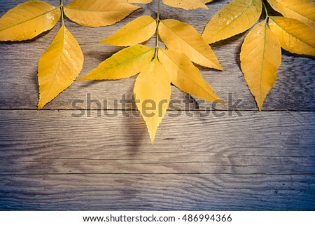 yellow colorful autumn leaves on wooden background copyspace