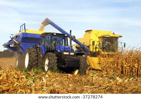 Yellow combine and tractor harvesting maize on the field - stock photo