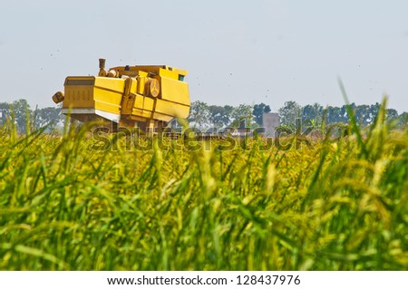 Yellow combined harvester on paddy field harvesting in sunny weather - stock photo
