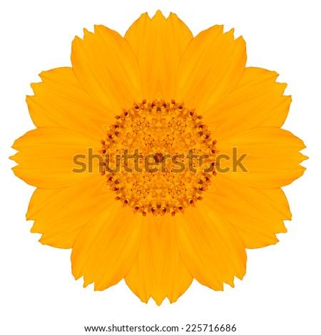 Yellow Concentric Singapore Daisy Flower Isolated on White Background. Kaleidoscopic Mandala Design. Beautiful Natural Mirrored pattern - stock photo