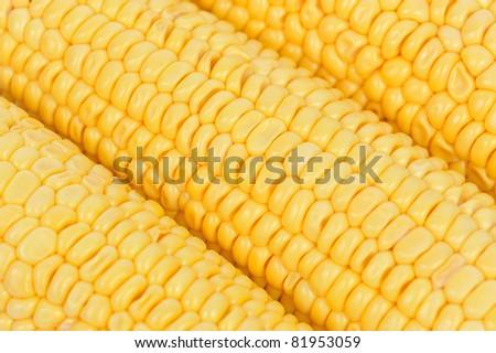 Yellow corn close-up - stock photo