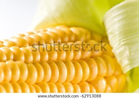 yellow corn cob isolated on white ground - stock photo