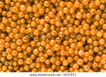 yellow currant background