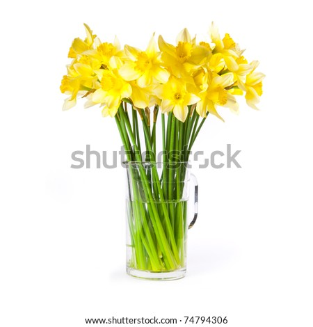 Yellow daffodils bouquet in a glass pitcher isolated on white background, low angle.