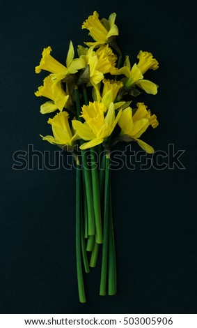 Yellow daffodils on a black background, view from above