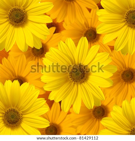 yellow daisy flower,background of the flowers - stock photo
