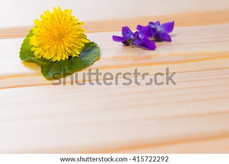 yellow dandelion in the Wooden background. Background wooden planks. Selective focus. Place for text. Spring postcard, yellow dandelion with green leaf