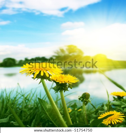 Yellow dandelions,blue sky  and sun. - stock photo