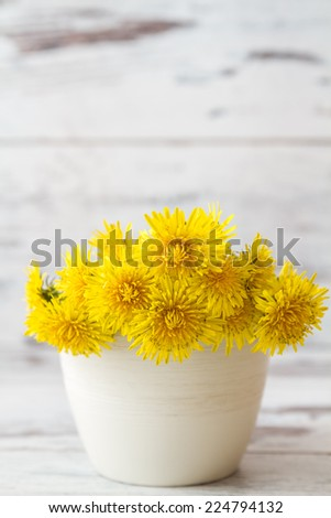 Yellow dandelions in white flower pot on white wooden background - stock photo