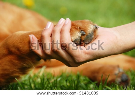 yellow dog paw and human hand shaking, friendship - stock photo