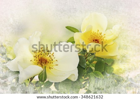 yellow dog roses, floral card design with texture frame - stock photo