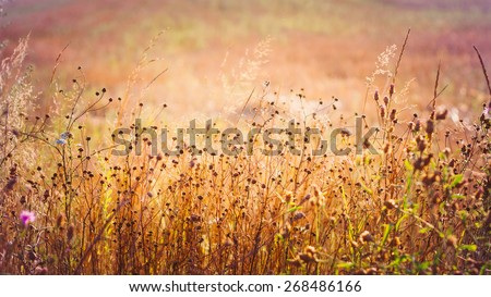 Yellow Dry Autumn Grass On Meadow Close-Up With Bright Sunlight. Sunny Yellow Background. Toned Instant Photo - stock photo