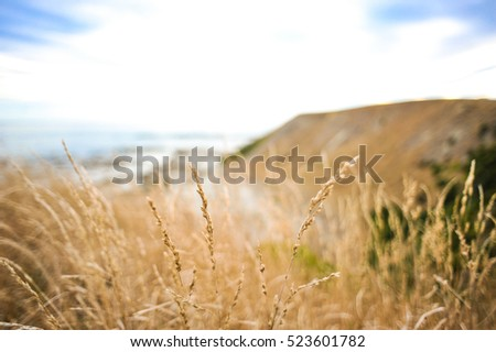 Yellow dry grass hill at Ohau Point Seal Colony, Kaikoura, New Zealand