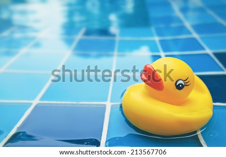 yellow duck in the swimming pool - stock photo