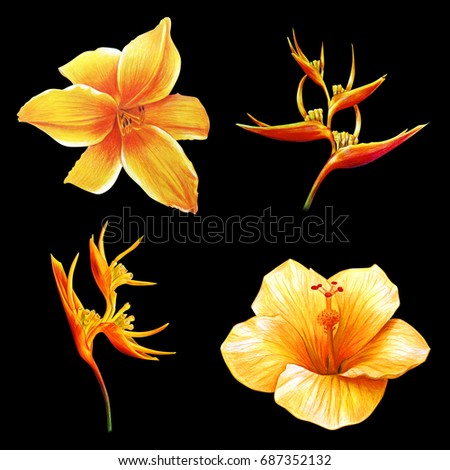 Yellow exotic flowers drawing on black stock illustration 687352132 yellow exotic flowers drawing on black background mightylinksfo