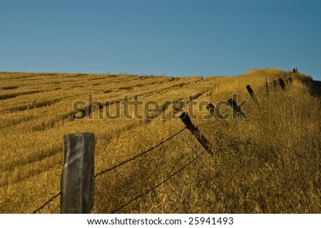 Yellow field and old fence line running up a hill - stock photo