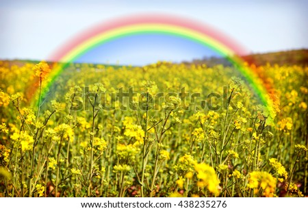 Yellow field of colza culture and rainbow landscape in Bulgaria - stock photo