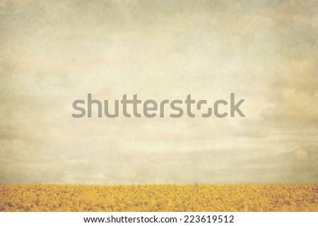 yellow fields vintage landscape  - stock photo