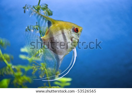yellow fish - stock photo