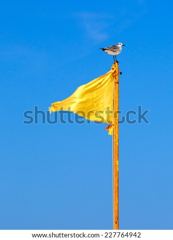 Yellow flag and a seagull on blue sky background - stock photo
