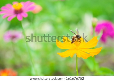 Yellow flower and bee show nature concept - stock photo