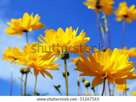 Yellow flower close up - stock photo