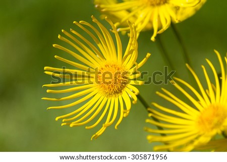 Yellow Flower clsoe up shot - stock photo