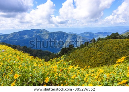 Yellow flower field in mountains